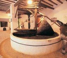Conoce el olivar de Jaén. Irconniños.com