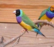 Parque familiar de pájaros. Irconniños.com